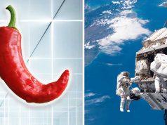 Astronaut NASA Tanam Cabai Di Stasiun Luar Angkasa