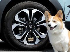 """Honda Rilis Aksesoris Bagi Pecinta Anjing Bernama """"Honda Dog"""""""